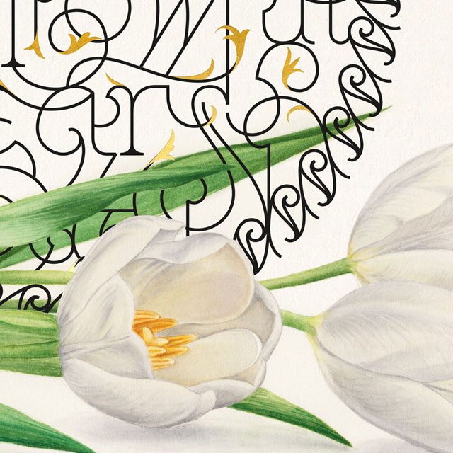 The Shades of Love - Love Lost White Tulip Watercolor Botanical Illustration Wall Art