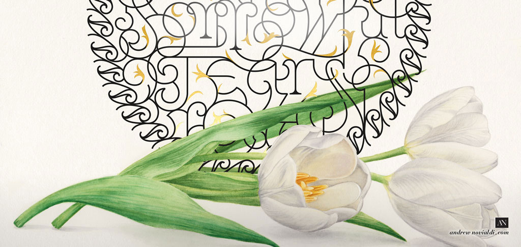 The Shades of Love - Love Lost White Purissima Tulip Watercolor Botanical Illustration Painting