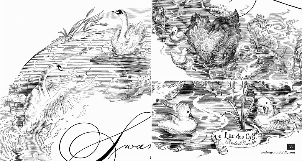 Swan Lake Spencerian Illustration Drawn in Fine Engraving Lines